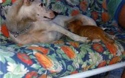 Cane e_gatto