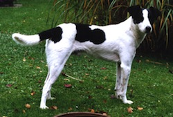 Mongrel Dog_Cosimo