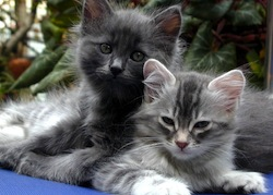 Cats Petunia_and_Mimosa_2004