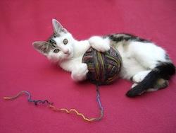 Spielendes Kätzchen