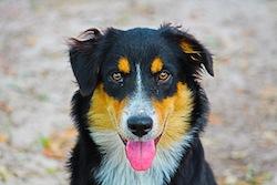Rosa Dog