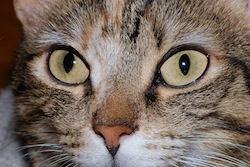 Cat eyes_2007-2