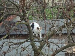 Gatto su_albero