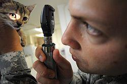 Un medico veterinario
