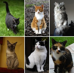 Collage of_Six_Cats-02