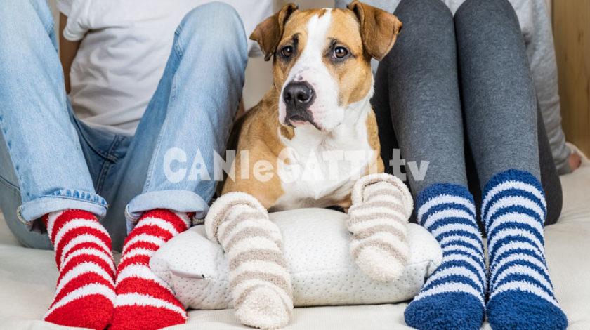 copri zampe cani, calzini cani, cani e gatti tv