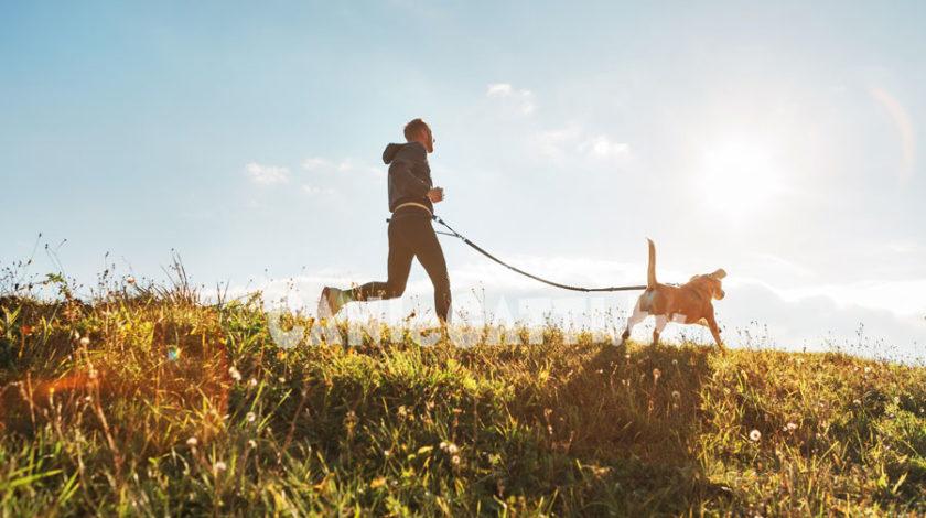 corsa con cane, ginnastica con cane, cani e gatti tv