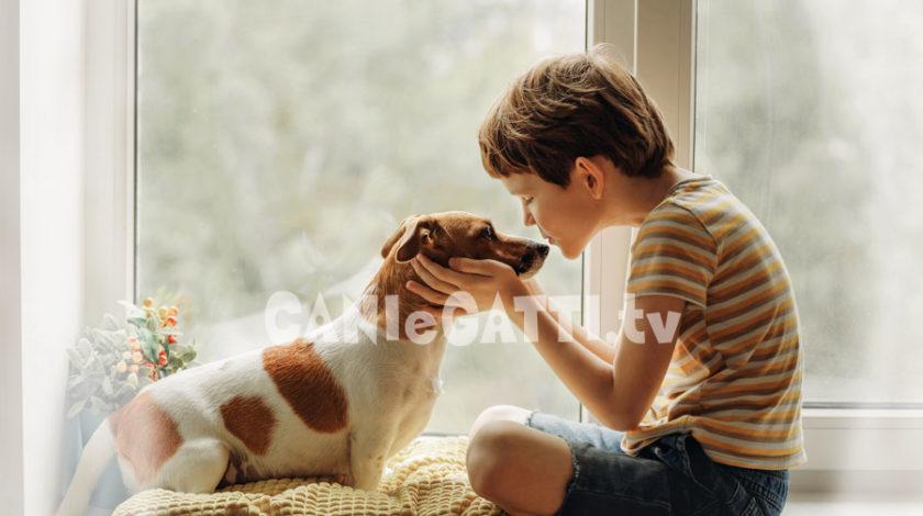 amanti cani, amore per cane, cani e gatti tv