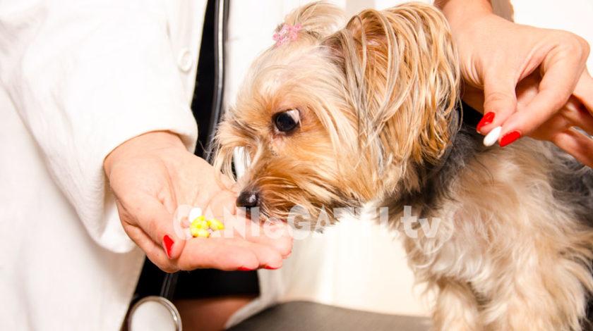 leptospirosi cani, cani e gatti, cani