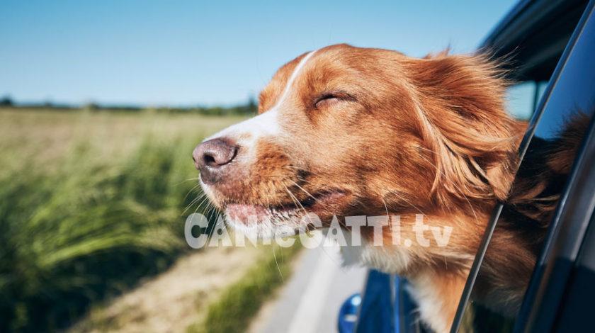 mal d'auto cane, cani e gatti