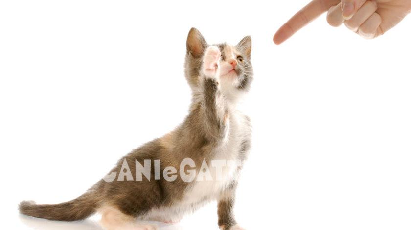 sgridare gatto, cani e gatti, gatti
