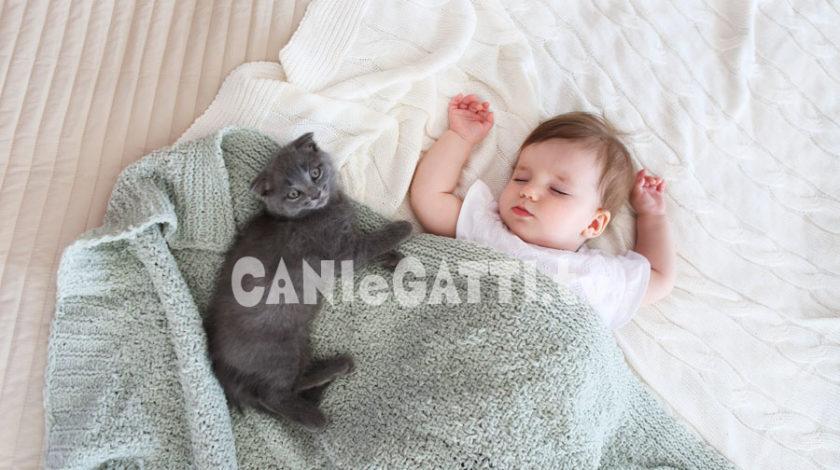 sognare gatti, cani e gatti