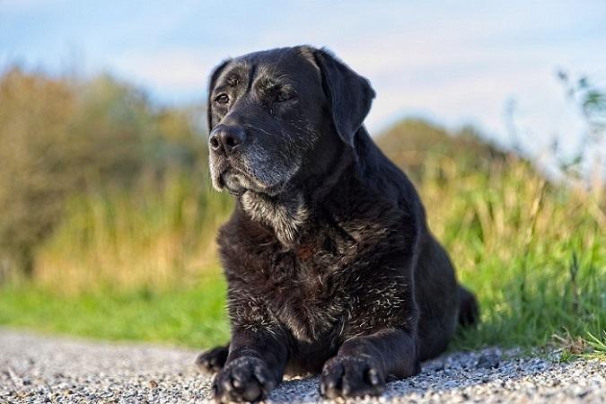 adozione di un cane anziano