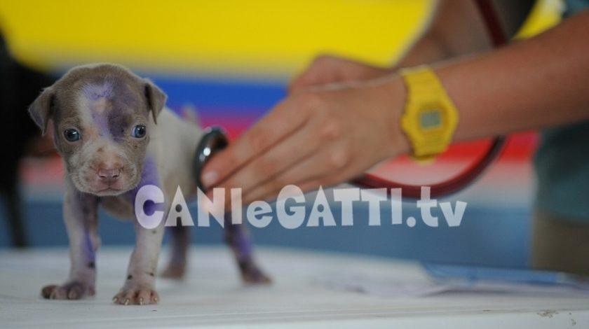 vaccini per animali domestici