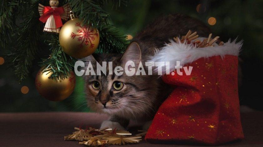 abituare il gatto agli ospiti in casa